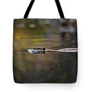 Beaver Swimming  Late Evening Tote Bag