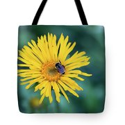 Bee On Curlyhead Goldenweed Tote Bag