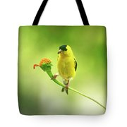 Goldfinch On Zinnia With Textures Tote Bag