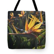 Bee Resting On The Petals Of A Bird Of Paradise  Tote Bag