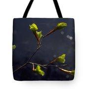 Beech Buds Tote Bag