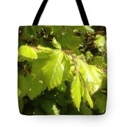 Beech Hedge In Spring Tote Bag