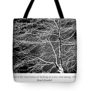Beech Tree Branches, Light And Shadow Tote Bag