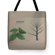 Beech Tree Id Tote Bag