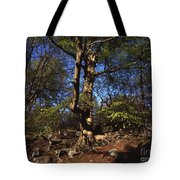 Beech Trees Coming Into Leaf  In Spring Padley Wood Padley Gorge Grindleford Derbyshire England Tote Bag