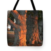 Beeches At The Beach Tote Bag