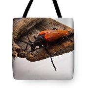 Beetle Pondering Tote Bag