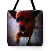 Begging Tote Bag