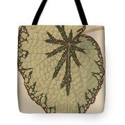 Begonia Marshallii  Tote Bag
