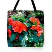 Begonia Plant Tote Bag