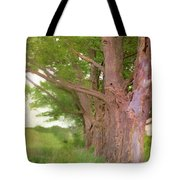 Being Old Trees Tote Bag