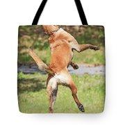 Belgian Shepherd Dog Tote Bag