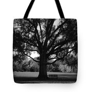 Bench Under Oak Tote Bag