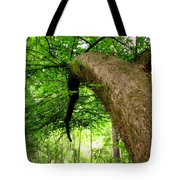 Bending Toward The Light Tote Bag