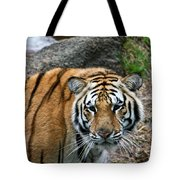 Bengal Eye To Eye Tote Bag