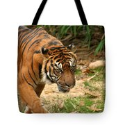 Bengal Tiger II Tote Bag