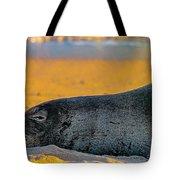 Benny At Sunset Tote Bag