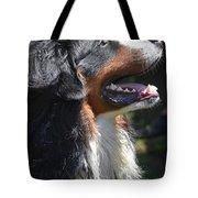 Bernese Mountain Dog Basking In The Sunshine Tote Bag