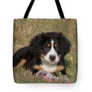 Bernese Mountain Dog Puppy Tote Bag