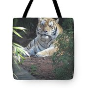 Beyond The Branches Tote Bag