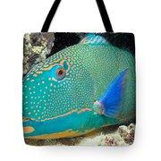 Bicolor Parrotfish Tote Bag