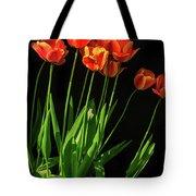 Bicolor Tulips Tote Bag
