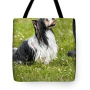 Biewer Yorkshire Terrier Is Looking Up At His Master Tote Bag