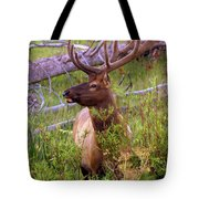 Big Bull Tote Bag