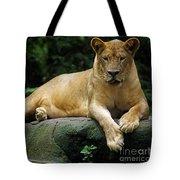 Big Cats 114 Tote Bag