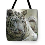 Big Cats 117 Tote Bag