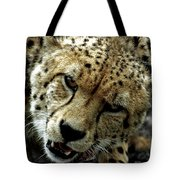 Big Cats 50 Tote Bag