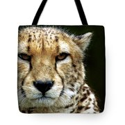 Big Cats 51 Tote Bag
