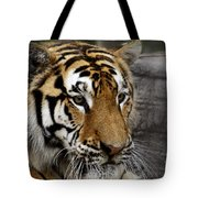 Big Cats 78 Tote Bag