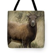 Big Horn Ewe-signed-#7480 Tote Bag