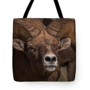 Big Horn Grazing Tote Bag