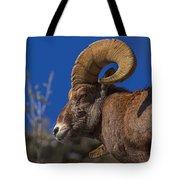 Big Horn Looking Down Tote Bag