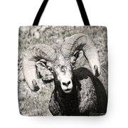 Big Horn Ram Bandw 5 Tote Bag