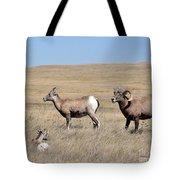 Big Horn Sheep Family Tote Bag