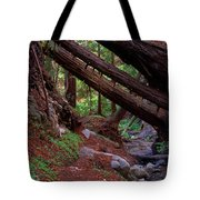 Big Sur Redwood Canyon Tote Bag