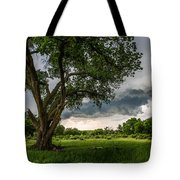 Big Tree - Tall Cottonwood And Storm In Texas Panhandle Tote Bag