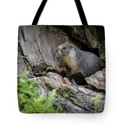 Big Tree Trail - Marmot - Sequoia National Park - California Tote Bag