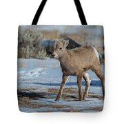 Bighorn Lamb 2 Tote Bag