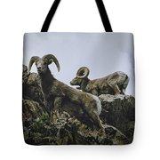 Bighorn Pair Tote Bag by Jason Coward