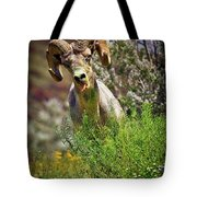 Bighorn Sheep And Wildflowers In Anza Borrego Desert State Park Tote Bag by Sam Antonio Photography