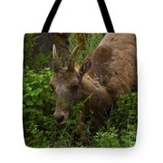 Bighorn Sheep Tote Bag by Barbara Schultheis