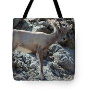 Bighorn Sheep Lamb Tote Bag