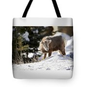 Bighorned Yearling - King Of The Hill Tote Bag