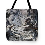 Bighorns Romantic Stare Tote Bag