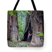 Bill Looking Up At The Sequioas Trees Tote Bag