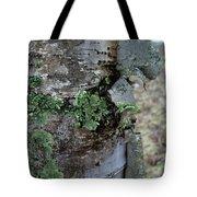 Birch Bark 1 Tote Bag
